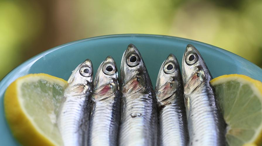 Pesce Azzurro Di Stagione Giornale Del Cibo