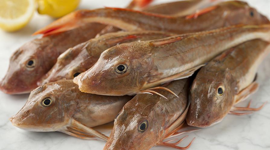 pesce-capone