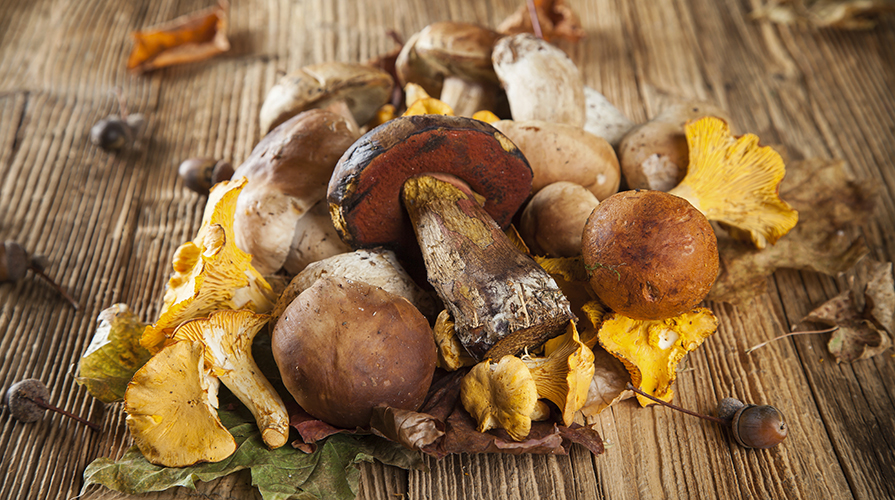ricetta-pasta-ai-funghi