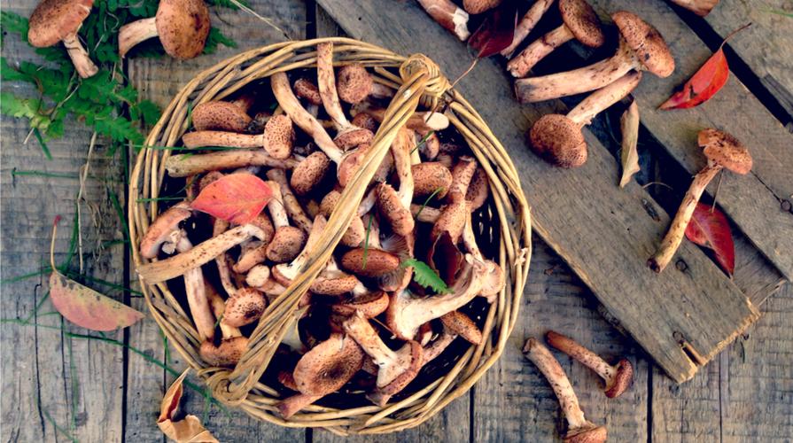 Risotto ai funghi chiodini