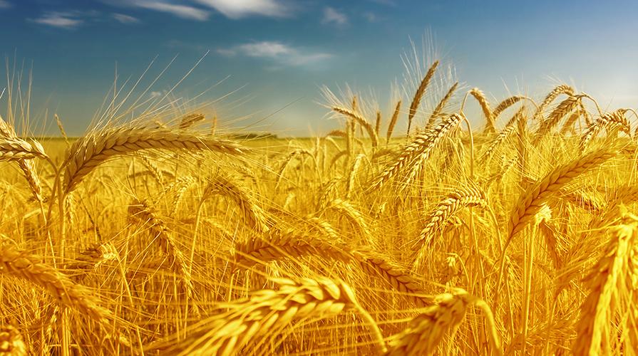 sicurezza-alimentare-in-tempi-di-crisi