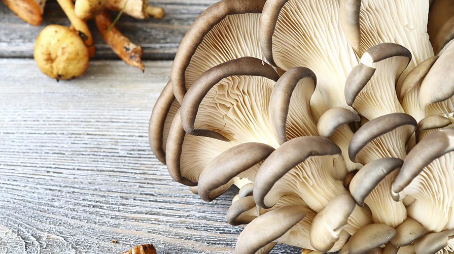 scialatelli-ai-funghi-cardoncelli