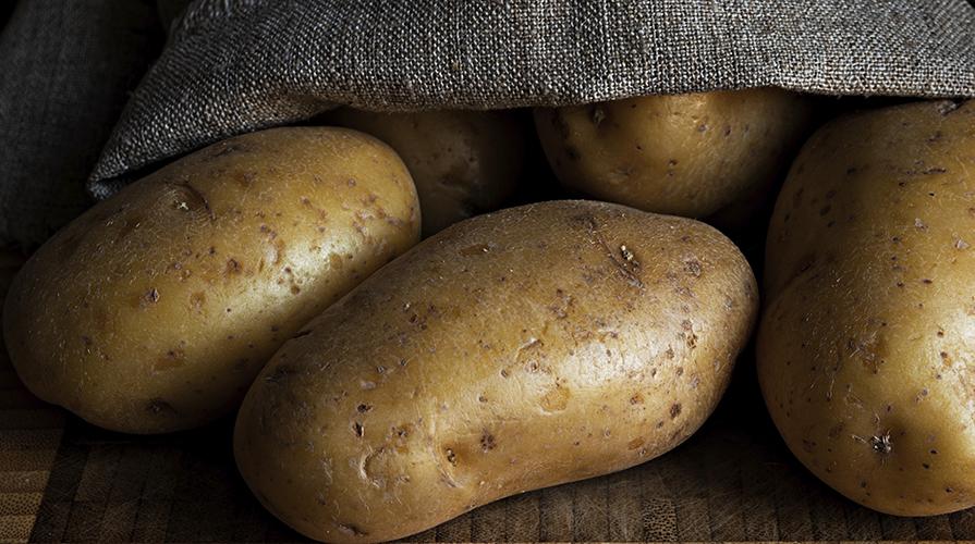 patata-transgenica-e-arrivata-in-europra