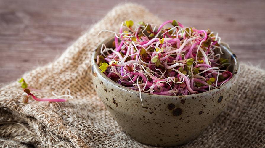 Ricetta germogli di soia e lattuga