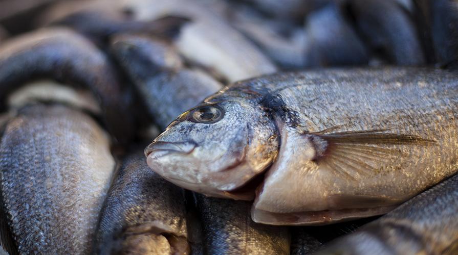 bollire il pesce