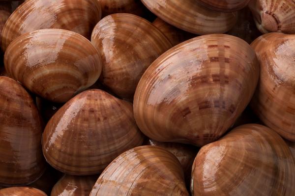 fasolaro mollusco