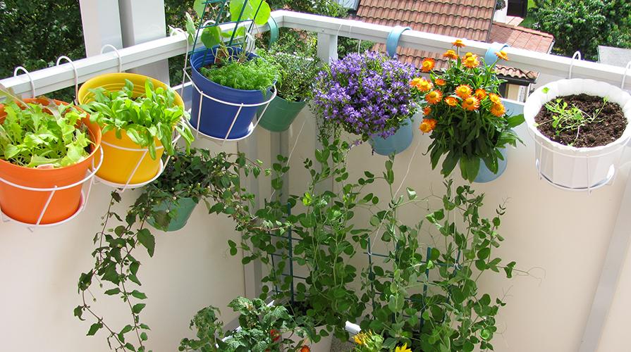un-corso-per-imparare-a-fatre-un-orto-giardino-naturale