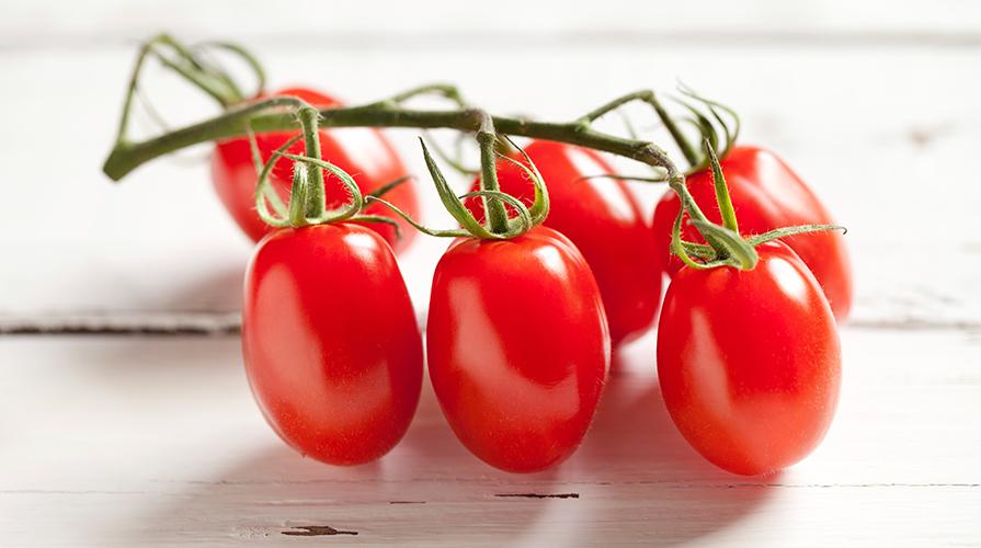 coltiviamo-il-pomodoro