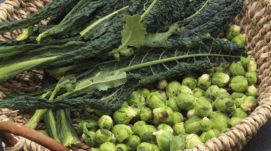 ricette-con-le-verdure-invernali