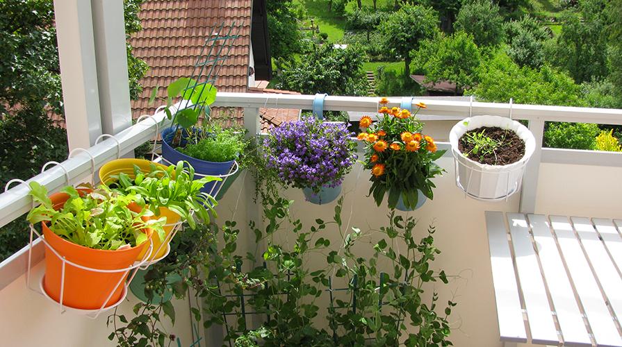 Ortensie Sul Balcone : Orto sul balcone quali contenitori scegliere giornale
