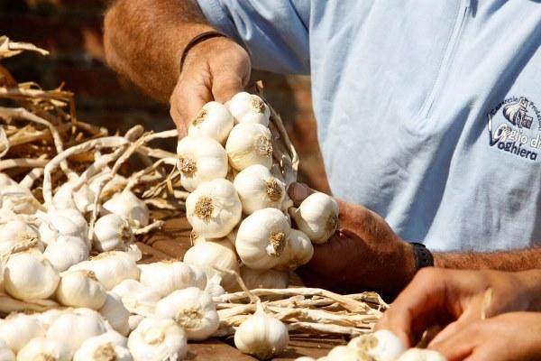 produzione aglio voghiera