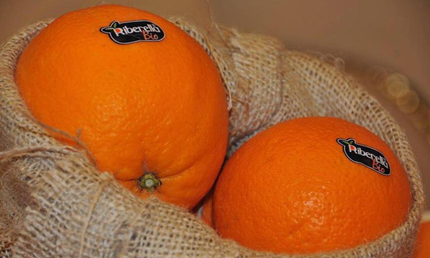 consorzio dop arancia ribera