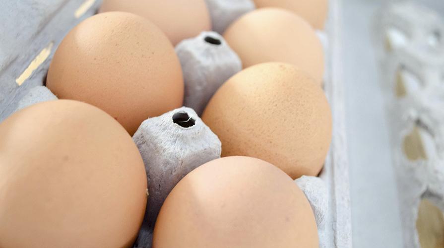 impariamo-a-leggere-le-uova
