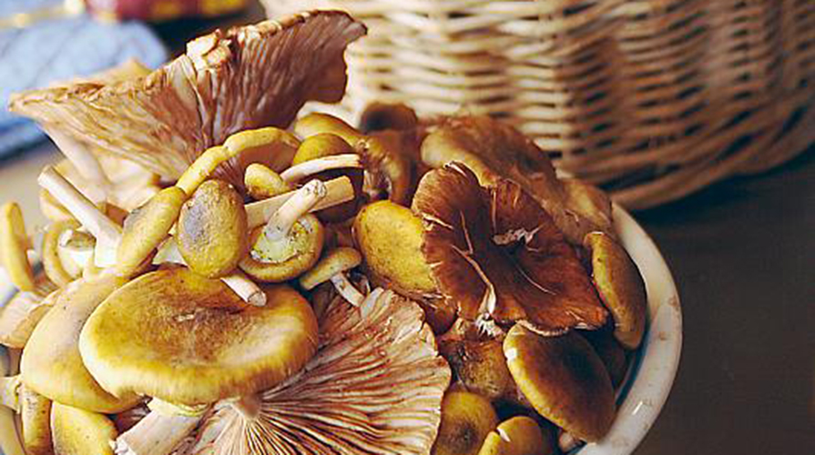 raccogliere-funghi