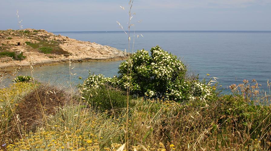 Cluster bio Mediterraneo