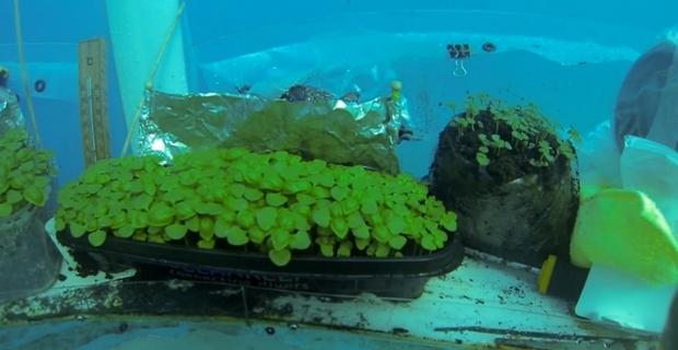 Orto di Nemo