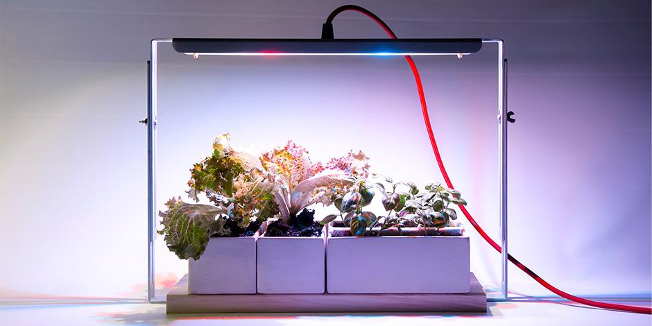 coltivare piante in casa