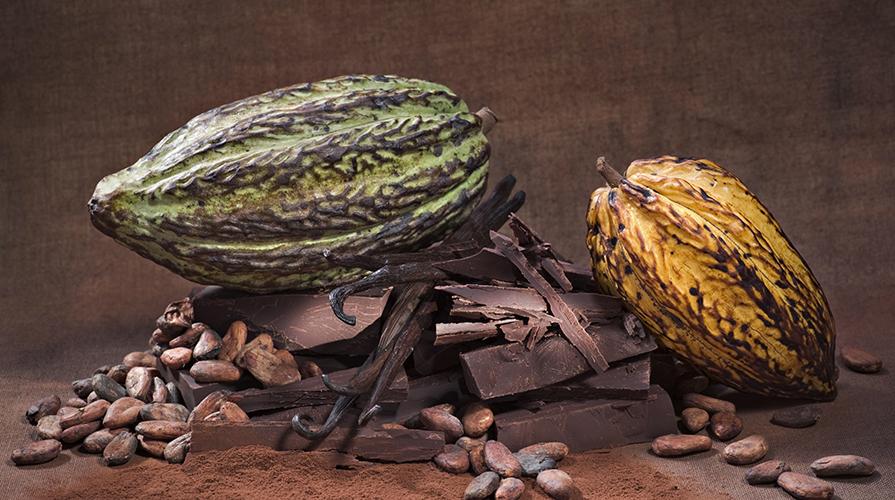 cluster cacao e cioccolato