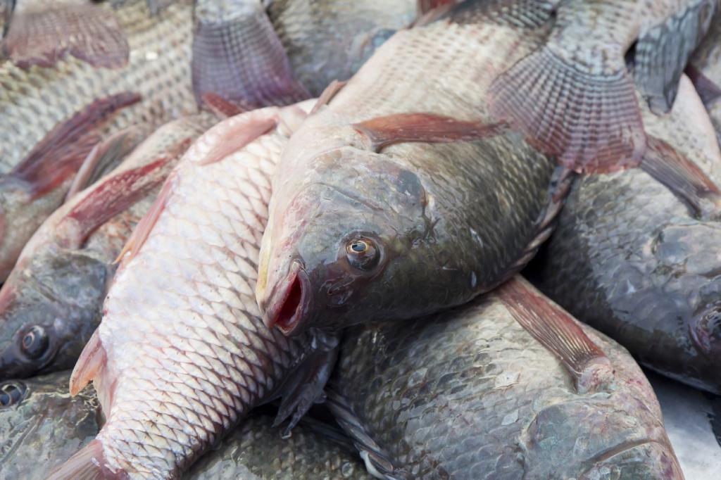 squame pesce