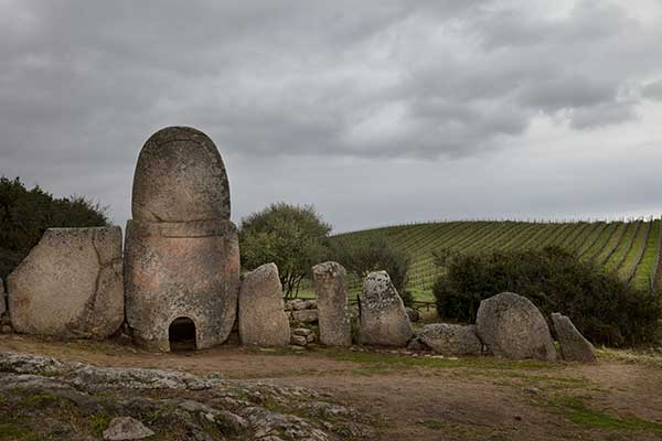 Antico vitigno in Sardegna
