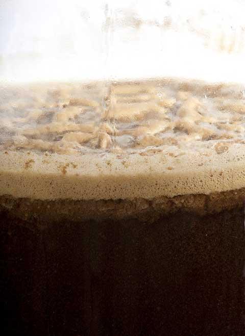 Lieviti per la birra
