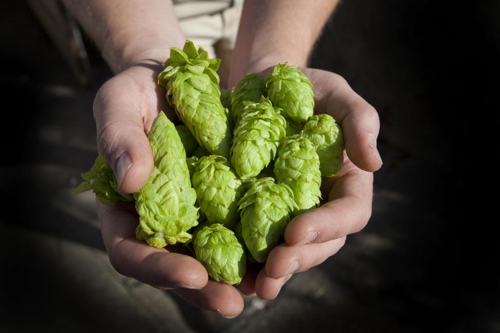 Ingredienti per la birra artigianale
