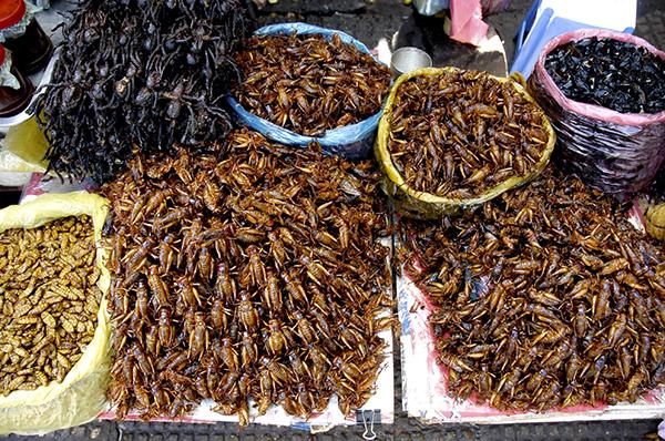 insetti commestibili