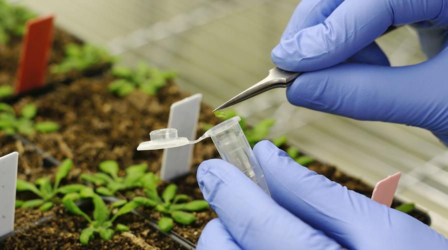 Organismi geneticamente modificati
