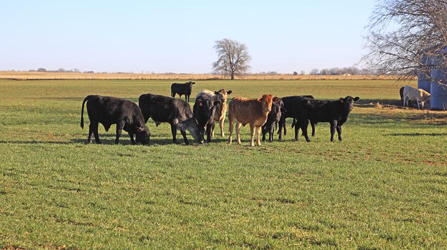 Carne grass fed