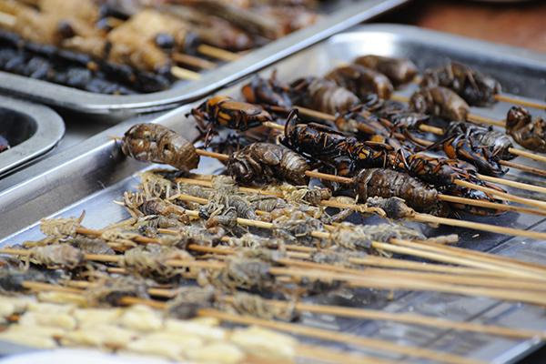 Spiedini di insetti