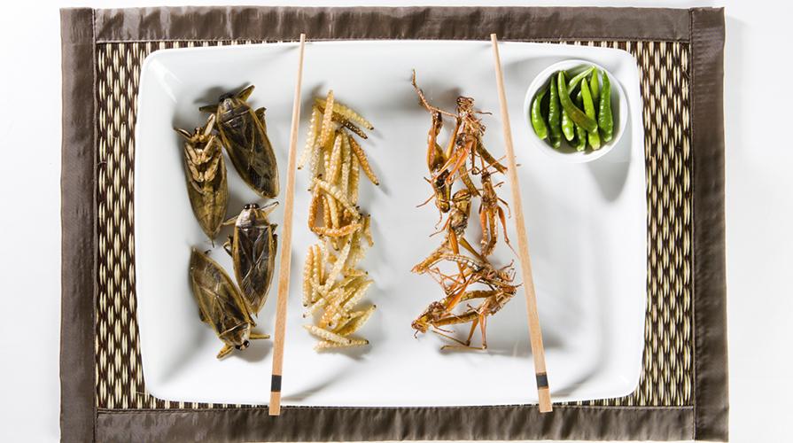 Mangiare insetti