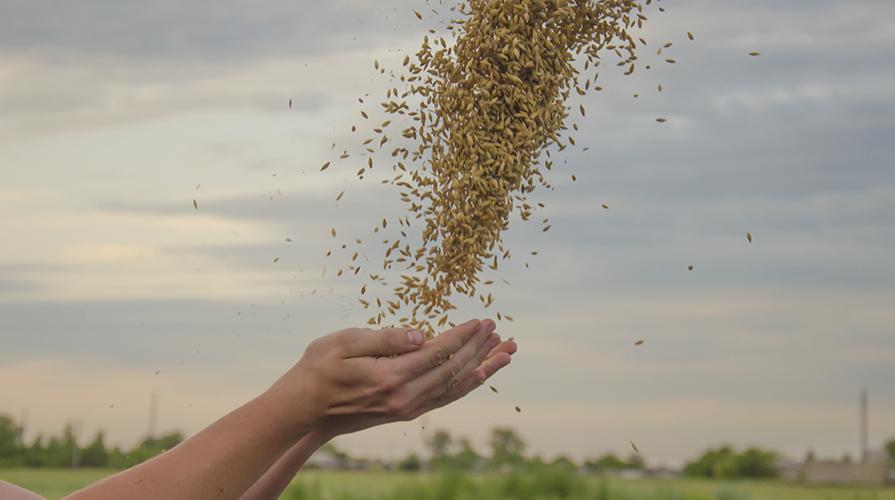 Biodiversità Agricola