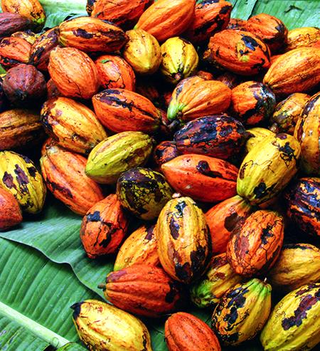 Frutti sparsi cacao