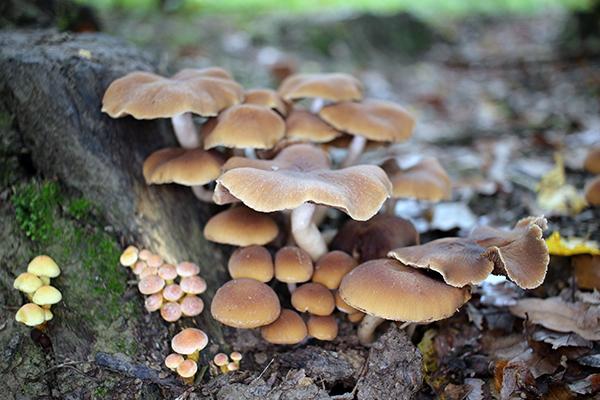 Funghi spontanei