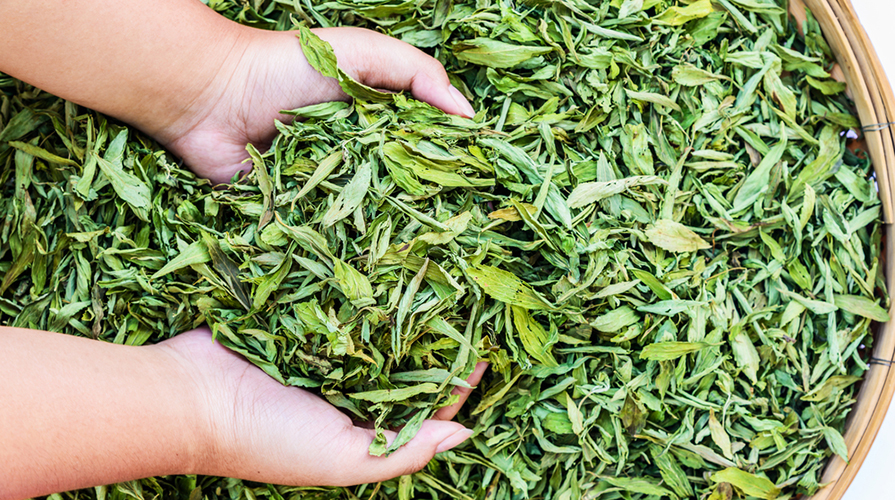 Foglie di Stevia