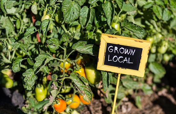 Agricoltura Locale