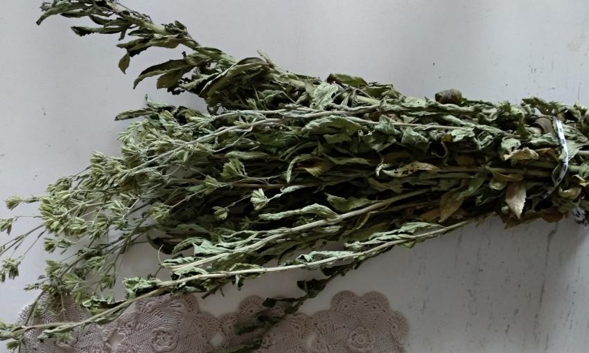foglie di stevai essiccata