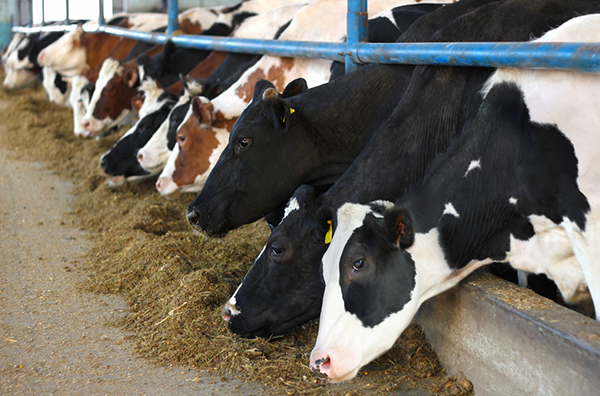 Farmageddon: il libro-inchiesta sugli allevamenti intensivi