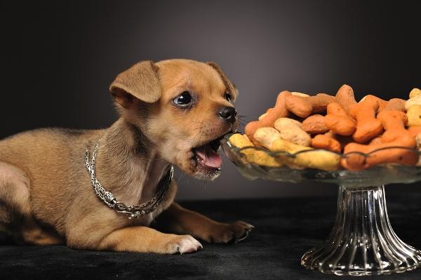 ricette per cani