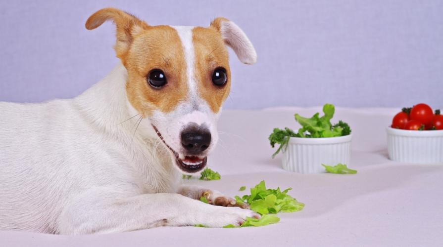 animali vegani