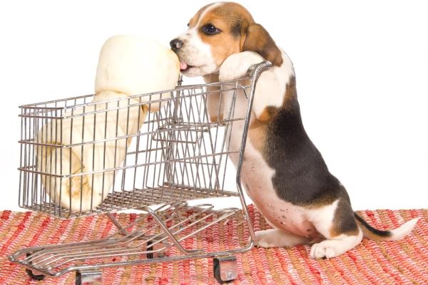 alimentazione vegana animali