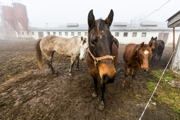 macelli clandestini cavalli