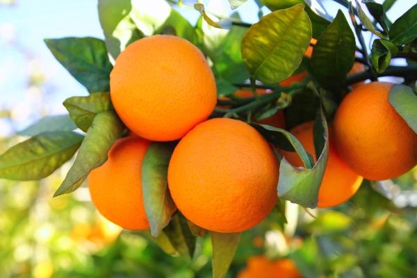 arance italiane