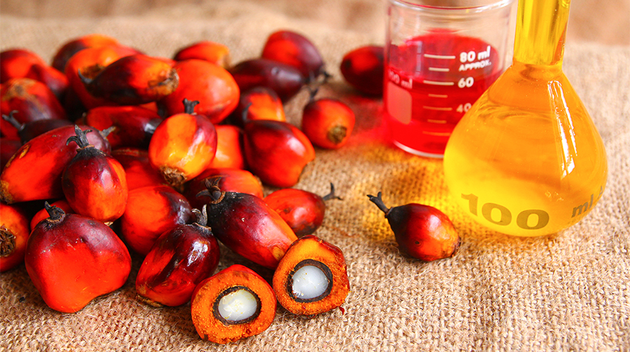 Olio di palma sostenibile