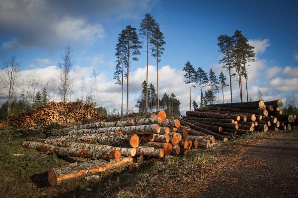 salvare le foreste