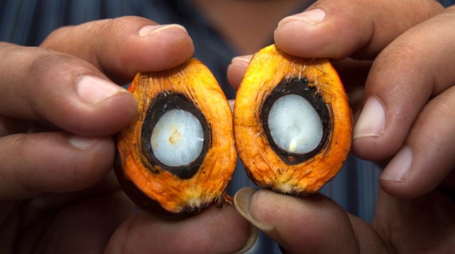 olio di palma cancerogeno