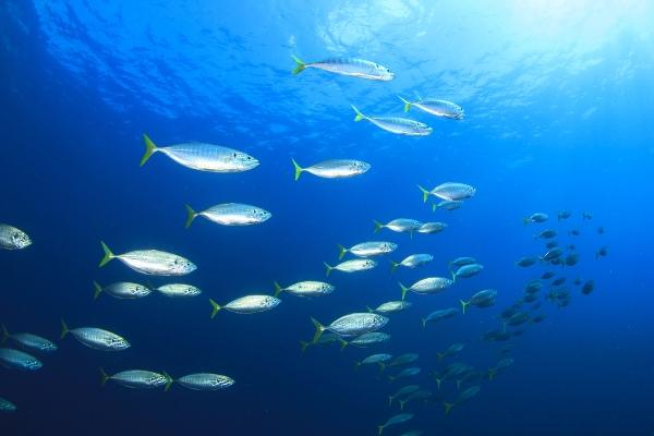 pesca illegale effetti ambiente
