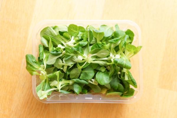 insalata conservare