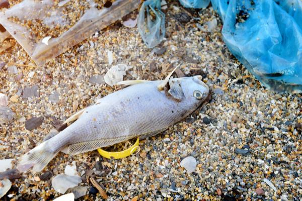 rifiuti plastici in mare