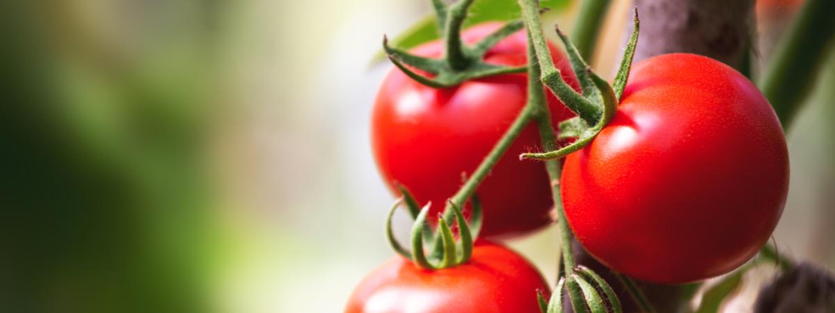frutta per dieta senza scorie